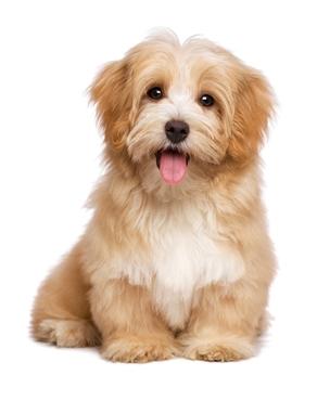 Bild für Kategorie Futter für kleine Hunderassen