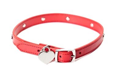 Bild für Kategorie Halsbänder & Leine